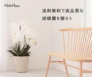 高品質且つ低価格な胡蝶蘭