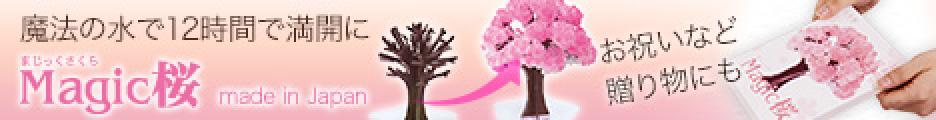 魔法の水で12時間で咲くマジック桜