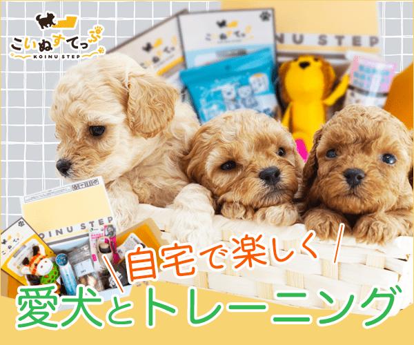 子犬と楽しく学べるお楽しみBOX「子犬育て初心者」の飼い主さんも安心