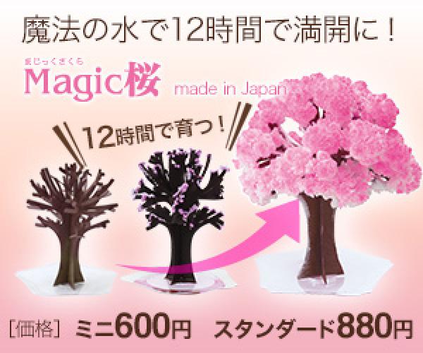 12時間で咲く不思議な桜シリーズ【Magic桜】